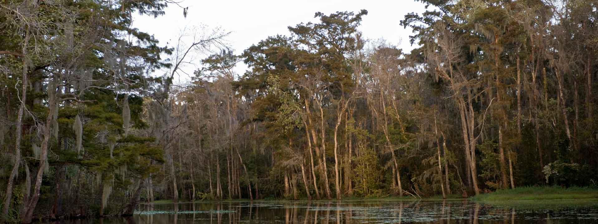 Cajun Bayou & Swamp Tour - New Orleans