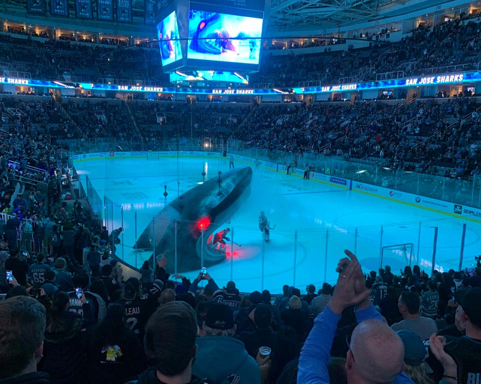 Where do the San Jose Sharks play hockey?