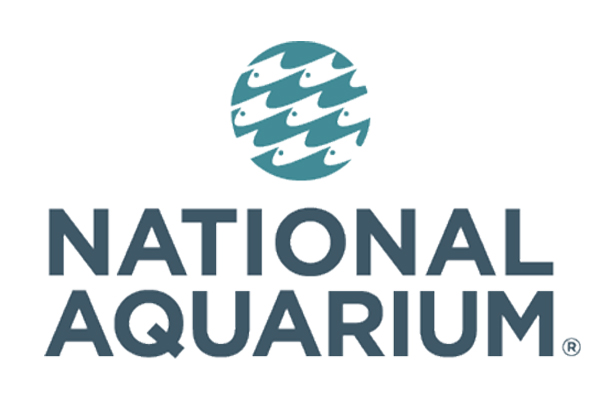 Things to Do in Baltimore - National Aquarium