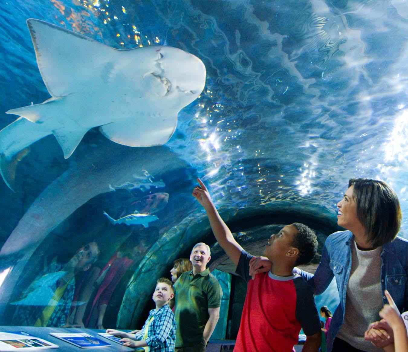 Things to Do in Cincinnati - Newport Aquarium