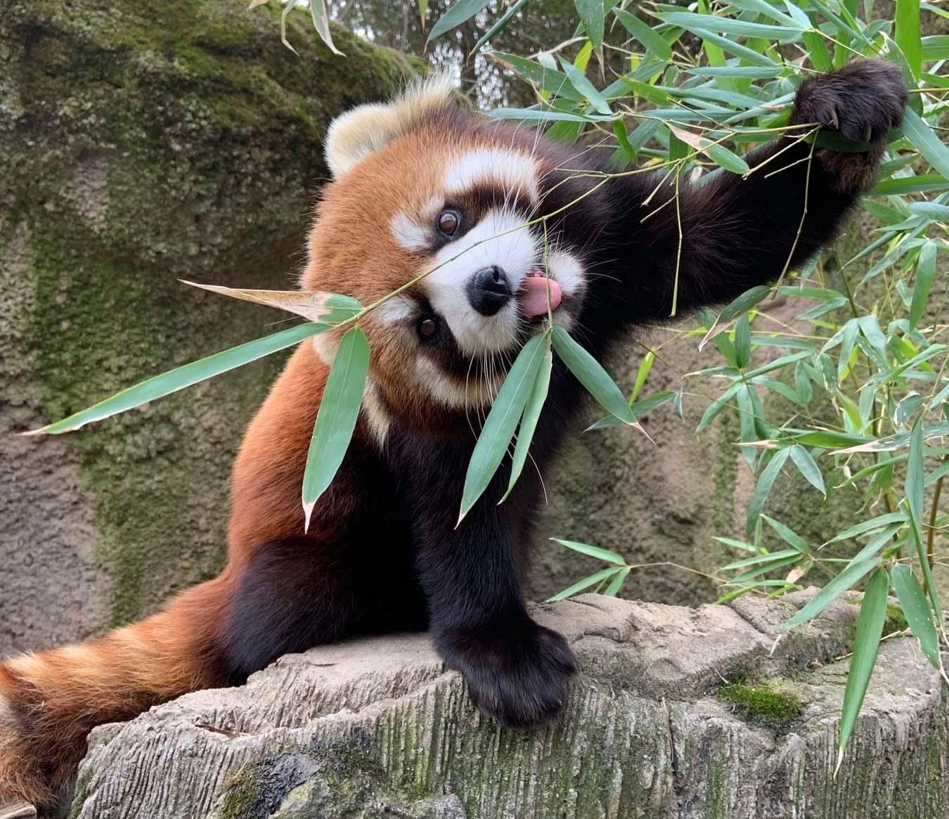 Things to Do in Columbus - Columbus Zoo and Aquarium