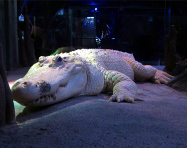 Things to Do in Houston - Houston Zoo