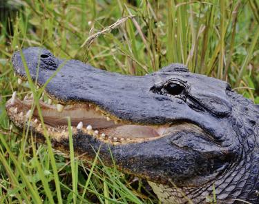 Things to Do in Miami - Florida Everglades Tour