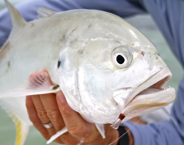 Things to Do in Miami - Deep Sea Fishing