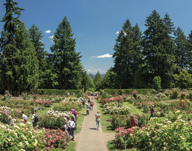 Things to Do in Portland - Washington Park