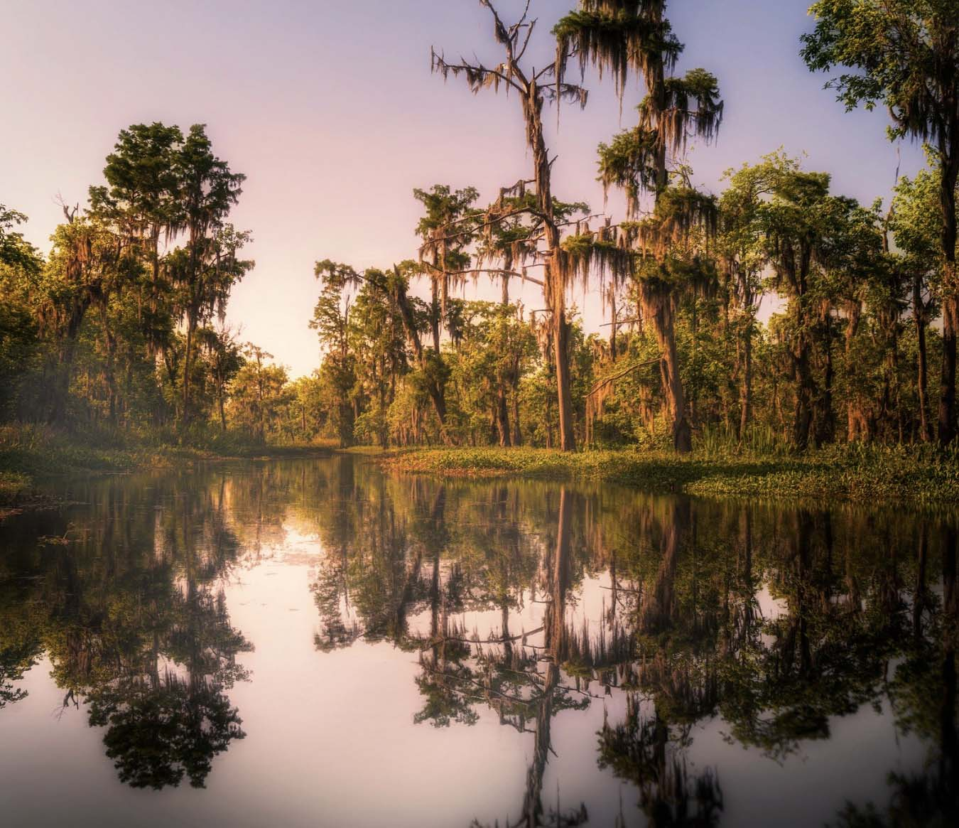 Things to Do in New Orleans - Gator Tour