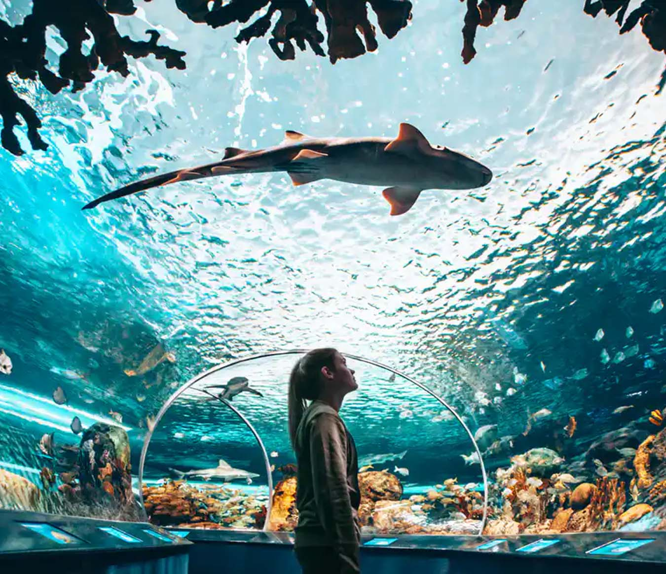 Things to Do in Toronto - Ripley's Aquarium