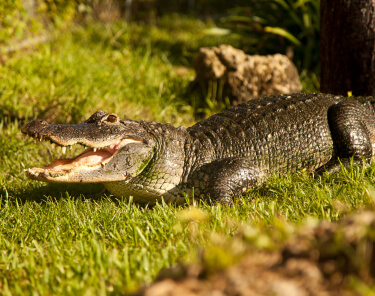 Things to Do in Sunrise Florida - Everglades - Sawgrass Recreation Park
