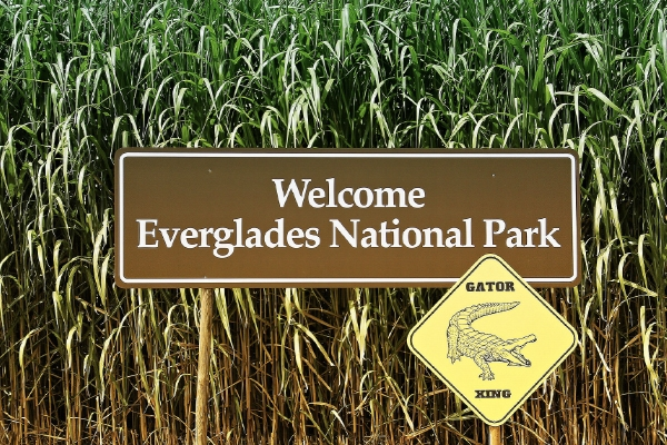 Things to Do in Miami - Florida Everglades Tour