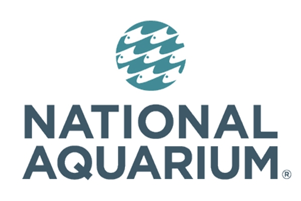 Things to Do in Baltimore - National Aquarium